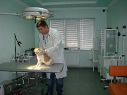 Запись на прием к врачу воронеж поликлиника 20